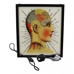 Decorative Lightbox, Phrenology Head
